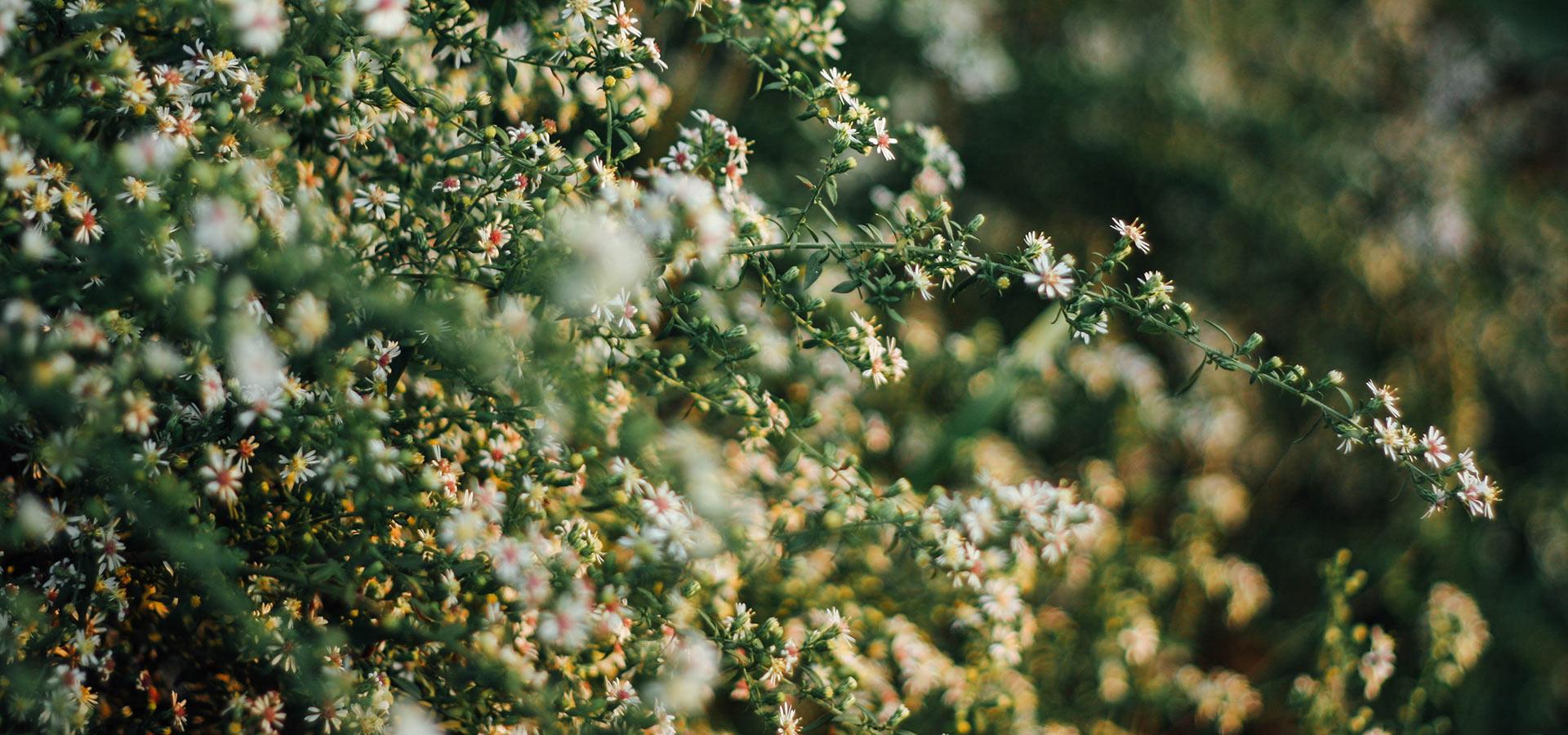 Kleine Gärten gestalten Bonava